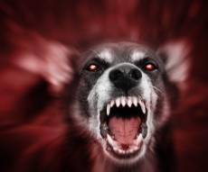 זירת הנשיכה הקשה - אימה: 10 כלבים התנפלו על ילדה באופקים