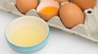 כולן משתמשות במסכת חלבונים - למה?