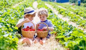 המחקר מעצים את התרומה החשובה של התזונה לתוצאות הטיפול הרפואי. אילוסטרציה