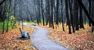 השלכת בפארק סקולניקי