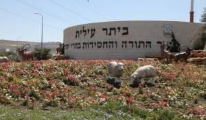 החרדים הם כשליש מתושבי יהודה ושומרון