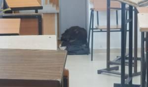 סלבודקא: כלב התנחל בסמוך לארון הקודש
