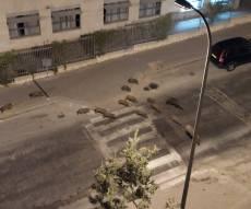 תיעוד הזוי: להקת חזירי בר במודיעין עילית