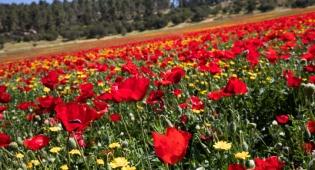 אביב הגיע פסח בא: עמק האלה בצבעים