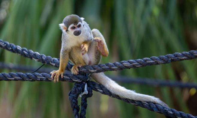משפחות חרדיות מבלות בגן החיות • תיעוד
