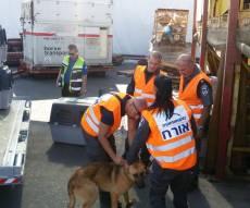 """משטרת ישראל """"גייסה"""" 17 כלבים מאולפים"""