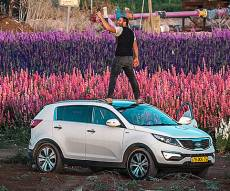 מרהיב במיוחד: שדה פרחים בעמק יזרעאל