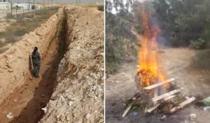 2,000 שתילי קנאביס הושמדו בשריפה • צפו