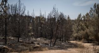 יער בן שמן השרוף