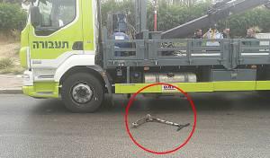 הקורקינט והמשאית בזירת התאונה