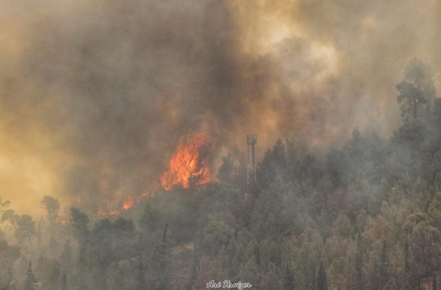 סוד האש: אסון הכרמל והדלקת נרות חנוכה