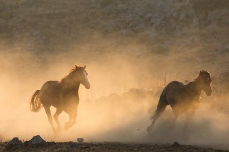 סוסים דוהרים ברמת הגולן - התחזית: חם, הטמפרטורות רגילות לעונה