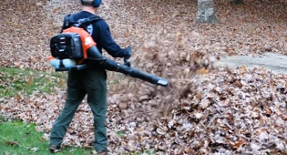 הפתעה מבהילה לאבא: ילדים בערימת העלים