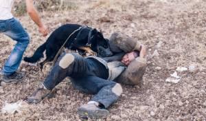 אילוסטרציה - הנחייה בבית שמש: לירות בכלבים משוטטים