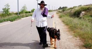 אילוסטרציה - עוברים לעיר חילונית? כך תתמודדו עם כלב