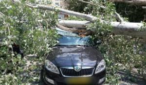 העץ שקרס על הרכב
