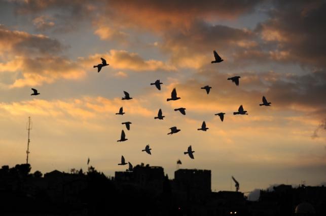 יונים בשמי ירושלים, אתמול