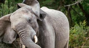 אילוסטרציה - האם וילדיה ישנו - ונרמסו למוות בידי הפילים