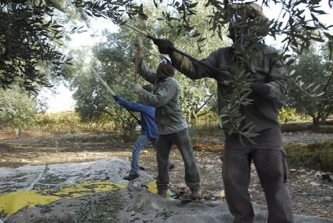 עץ זית - איך תמיד דופקים את השחורים