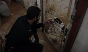 עשרות כלבים חולצו מהכפר הדרוזי • תיעוד