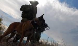 אילוסטרציה, כלב תקיפה מבצעי