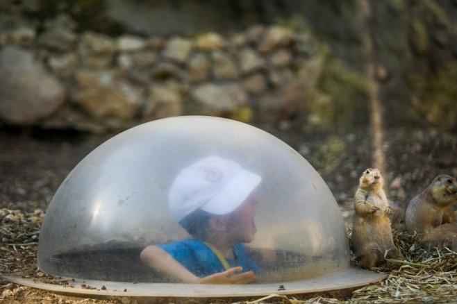 יַחֲלִיפוּ כֹחַ: צלם 'כיכר' עם החרדים בגן החיות
