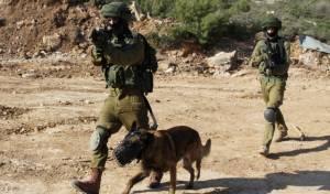 כלב תקיפה ישראלי