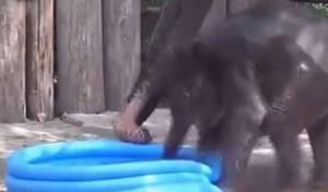 צפו: הפיל טבע בברכת פעוטות
