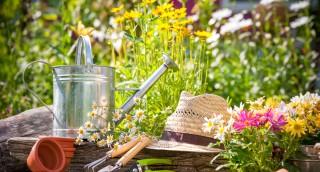 למה כדאי דווקא באביב להפוך את הגינה לגן עדן? מדריך לשימור ועיצוב הגינה