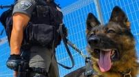 כלב משטרתי. אילוסטרציה - 3 שוטרים שיסו כלבה בערבים שיידו אבנים