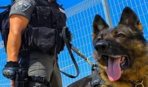 כלב משטרתי. אילוסטרציה