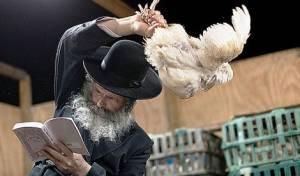 """ניו יורק: ביהמ""""ש התיר את הכפרות בתרנגולים"""