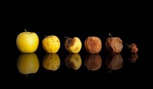 אבולוציה של פירות רקובים