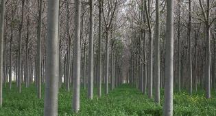 יער - יוון: כורתים יערות בשביל להתחמם