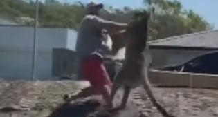 גבר ניסה להילחם בקנגורו; זה לא נגמר טוב