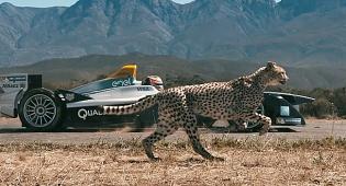 רגעי השיא - מי ניצח? הברדלס בתחרות מול מכונית מירוץ • צפו
