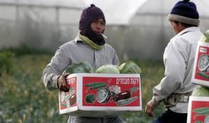 תאילנדים עובדים בחקלאות, ארכיון