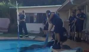לוחמי האש חילצו סוס שנפל לבריכה
