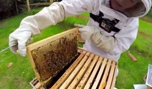 מהכוורת לצנצנת: דבש עם GoPro