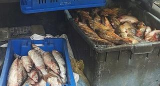 """אב ובנו מואשמים בגניבת 130 ק""""ג דגים"""