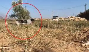 """פעילי הטרור המפריכים את הבלונים נמלטים מאש צה""""ל"""