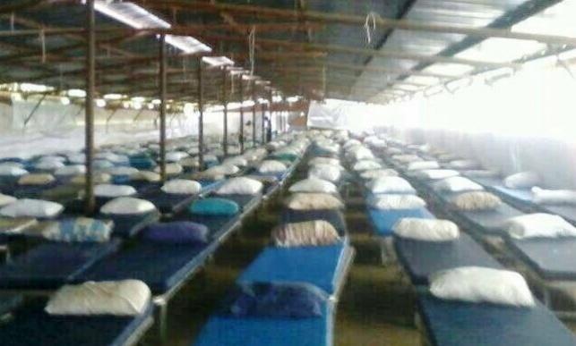 המיטות בלולי התרנגולות