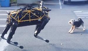 התעללות או סרטון מצחיק? רובוט נלחם בכלב
