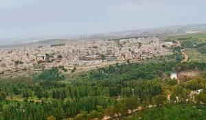 יער קולה והעיר אלעד