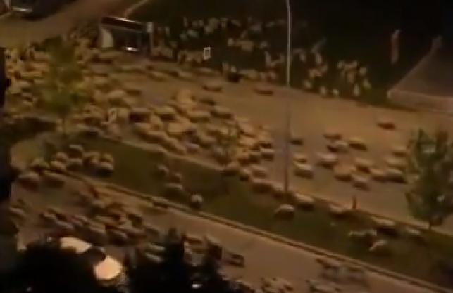 אמיתי: האנשים בבידוד, הכבשים השתלטו