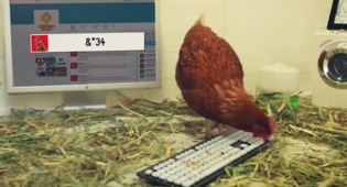 קמפיין ביזארי: תרנגולת מצייצת בשם המסעדה