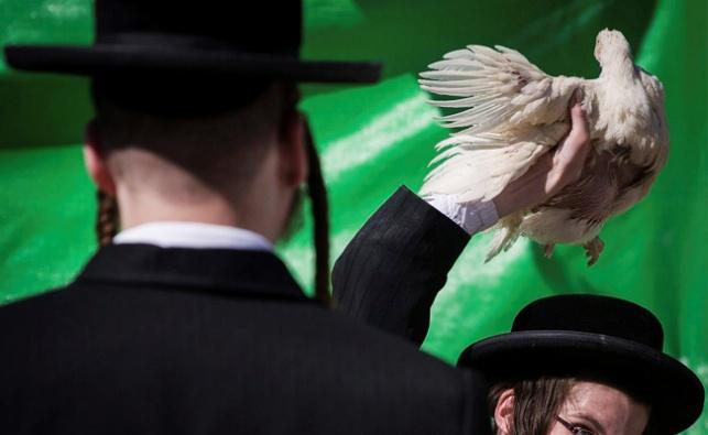 """""""לקראת החגים היהודים, קיים חשש מגניבת עופות"""""""