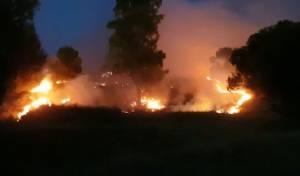 שריפה ביער שוקדה