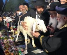 הראשון לציון פדה את החמור מידי הכהן