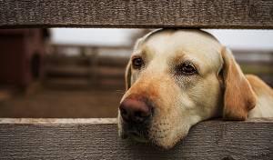 הכלב תועד מתגעגע לבעליו • וידאו